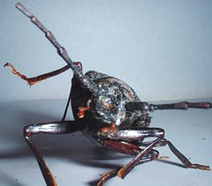 (schenck548) Tags: bug insect roach