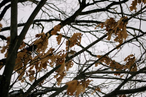 Tree-climbing mouse 2