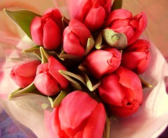 Fresh from Pike Place Market (Culinary Fool) Tags: pink flowers red rose tulips bouquet pikeplacemarket blooms culinaryfool