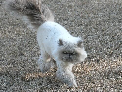 Cocoanut Cat