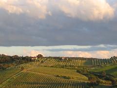 una vigna (daphne12391) Tags: paesaggi