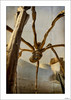 Y Mamá se comió al Guguen... (V- strom) Tags: concepto concept araña spider arquitectura arquitecture escultura sculpture metal titanio titanium cielo sky construcción building museo museum guggenheim bilbao españa spain luz light viaje travel nikon nikond700 texturas textures vstrom recuerdo memory