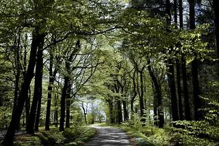 Auf dem Weg zu den Aussiedlerhöfen; Bergenhusen, Stapelholm (28)