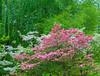 Spring Memories. (Omygodtom) Tags: setting senery scenic scene spring colours outside tamron dof d7100 digital contrast art