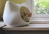 Otis (rootcrop54) Tags: otis dilute orange ginger tabby male cat whiskascatheadbed whiskaspromotion cathead bed window bokeh tabletop neko macska kedi 猫 kočka kissa γάτα köttur kucing gatto 고양이 kaķis katė katt katze katzen kot кошка mačka gatos maček kitteh chat ネコ