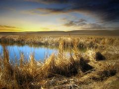 Prairie pond 21 (mrbillt6) Tags: landscape rural prairie pond field farmland grass sky outdoors country countryside northdakota
