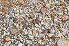 Delta del Ebro (esta_ahi) Tags: deltadelebro baixebre tarragona spain españa испания mar bivalvia mollusca conchas petxines fauna marina