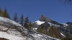Ovronnaz (bulbocode909) Tags: valais suisse ovronnaz montagnes nature printemps paysages arbres forêts mélèzes neige bleu branches