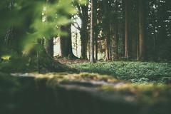 (a└3 X) Tags: bäume natur licht sonne wald nature alexander olympus österreich neustift landscape outdoors color