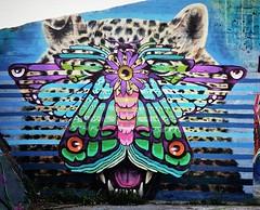 Who looks at who? / #art by #CeePil & #Huascaya. . #Gent #Belgium #streetart #graffiti #urbanart #graffitiart #streetartbelgium #graffitibelgium #visitgent #urbanart_daily #graffitiart_daily #streetarteverywhere #streetart_daily #ilovestreetart #igersstre (Ferdinand 'Ferre' Feys) Tags: instagram gent ghent gand belgium belgique belgië streetart artdelarue graffitiart graffiti graff urbanart urbanarte arteurbano ferdinandfeys ceepil huascaya