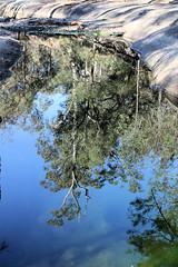 Reflecting Pool (destinationsjourney) Tags: pool reflecting reflection trees bushwalk washpools scone australia newsouthwales towarrinationalpark