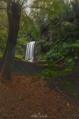 IMGP4650t (nathanmeade_) Tags: hopetounfalls otways visitvictoria waterfall waterfalls australia pentax pentaxian