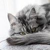 relaxing cat (Marjan van de Pol) Tags: canon canon5d grace katten nederland fave favorite faved