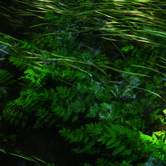 direction given (vertblu) Tags: stream inthestream underwater underwaterflora inthewater intheshades shady lightrays sunrays sunbeam flowing flow flowingwater water watersurface reflection reflections reflectedskies amongtheshades green greens shadesofgreen blue bluegreen vert vertblu bsquare 500x500 kwadrat almostabstract abstractfeel