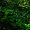 direction given (vertblu) Tags: stream inthestream underwater underwaterflora inthewater intheshades shady lightrays sunrays sunbeam flowing flow flowingwater water watersurface reflection reflections reflectedskies amongtheshades green greens shadesofgreen blue bluegreen vert vertblu bsquare 500x500 kwadrat almostabstract abstractfeel