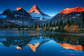 Sunrise Mt Assiniboine Reflected in a Tarn With Golden Larch From Mt Assiniboine Provinvial Park in British Columbia Canada