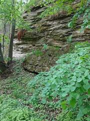 Proterozoic slates quarry (nesihonsu) Tags: kobylagłowa poland polska przedgórzesudeckie przyrodapolska sudeticforeland foresudeticblock wzgórzadobrzenickie niemczańskie wzgórzaniemczańskostrzelińskie wzgórzaniemczańskie geology geologia geologiapolski geotourism geoturystyka geologyofpoland rocks rock outcrop quarry slate proterozoic abandonedquarry rockformation rockwall skały skała natureofpoland nature lowersilesia dolnyśląsk dolnośląskie