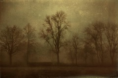 All is Calm (Bill Eiffert) Tags: trees nature calming painterly tone pictorialism pictorial texture