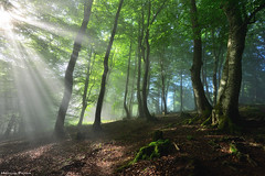 Towards the light (Hector Prada) Tags: forest spring mist fog light trees mood moss sunlight sunny leaves enlightened magic nature bosque primavera bruma niebla luz arboles woods atmósfera musgo sol hojas shadows mágico encantado euskalherria paísvasco basquecountry