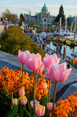 The Arrangement (stevenbulman44) Tags: flower victoria britishcolumbia 2470f28l canon lseries spring color pink orange