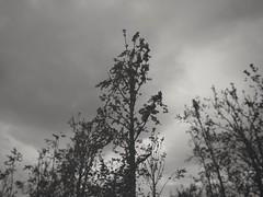 Creepy tree. (thnewblack) Tags: lg v30 smartphone android blackwhite snapseed dark moody f16 16mp hdr britishcolumbia