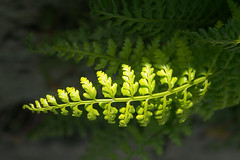 Spring greens (Francisco (PortoPortugal)) Tags: 0972018 20180426fpbo7765 primavera spring verdes greens natureza nature flora porto portugal portografiaassociaçãofotográficadoporto franciscooliveira