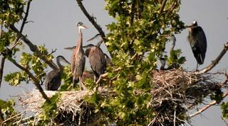 5623ex2 crowded nest
