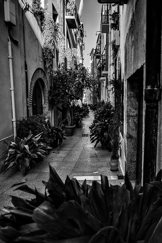 C'est la rue des plantes