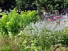 Edible Vauxhall Walk with Edible Lambeth (Jason_Cobb) Tags: vauxhall lambeth gardens urban