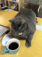 """Half of a Cup!?!"" (sjrankin) Tags: 21may2018 edited animal cat yuba table kitchen computer mouse coffee cup cupofcoffee yubari hokkaido japan"