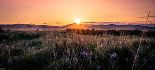Sunrise with wildflowers!!