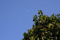 Half moon (しまむー) Tags: canon eos kiss digital ef 1855mm f3556