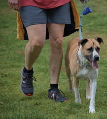 Input Senses Activated (Scott 97006) Tags: walk legs dog canine animal pet cute ears