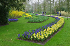 Lisse (Pays-Bas) : parc de Keukenhof (bernarddelefosse) Tags: keukenhof parcfloral fleurs lisse paysbas