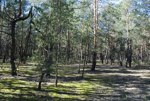 Волинський ліс InterNetri Ukraine 1413081396