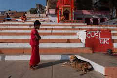 Varanasi | 2017 (Ravikanth K) Tags: 500px varanasi steps stripes dog pet puppy mom kid boy talking love kasi domestic animal outdoor travel street ravikanthkurma cwc cwc623 chennaiweekendclickers red ghat