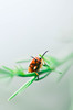 look at me (Scholt's) Tags: insecte insect nature nikon d7000 macro macrophotography green vert orange