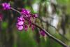 Colores primaverales (mariusbucsa) Tags: flor rio arbol paseo tarde colores primavera