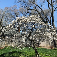 It's your time to shine, little Star Magnolia!
