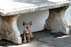 LR-DSCF0505-2 (studiofuntas) Tags: watarun bangkok thai thailand cat cats straycat 猫 バンコック バンコク タイ タイ王国 子猫 blackcat foodstands tropicalrainforest tropics