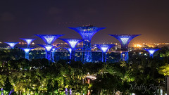 Gardens by the Bay, Singapore -7444 (Matty 8o) Tags: singapore outdoor outdoors vacation holiday travel travelling canon canon700d 700d lens dslr photography photos photo photograph photographer marina bay marinabay marinabaysands canon1855mm 1855mm 1855 beautiful light lights night nightshots shot dark view long exposure longexposure city love gardens gardensbythebay asia tourism tourist nightphoto nightphotography hobby
