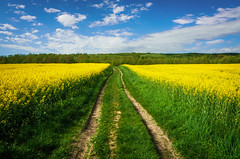 Midday walk p. I (ErrorByPixel) Tags: silesia lower bogatynia sunny blue yellow midday rapeseed path green sky clouds field forest trees nature spring grass road