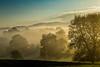 Golden morning fog (Rita Eberle-Wessner) Tags: landschaft landscape sonnenaufgang sunrise morgen morning tagesanbruch nebel fog baum bäume tree trees walnuss walnut frühling spring gras grass wiese wiesen meadow weide pasture wald forest hügel hills golden goldenmorningfog odenwald weschnitztal licht light layersoflight sonnenstrahlen sunrays