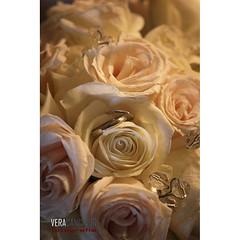 Wedding ring (Vera Cancinos) Tags: roses bouquet weddingrings wedding rings