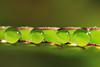 2Q4A9953b (영수엄) Tags: 새벽이슬 아침이슬 오이풀 일액현상 초접사 dew morningdew 풀잎