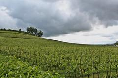 Vignoble (just.Luc) Tags: vineyard wijngaard vignoble weinberg saintémilion gironde nouvelleaquitaine france frankrijk frankreich francia frança europa europe clouds wolken nuages nubes