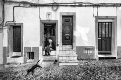 Elvas, Alentejo, Portugal (Hendrik Lohmann) Tags: streetphotography portugal people traditional bnw blackandwhite monochrome travel nikon cat