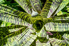 Hunte's Gardens-86 (hotcommodity) Tags: huntesgardens tropical botanical garden lush equator island caribbean barbados tourism travel explore adventure green flowers exotic historic interesting texture color pattern shadows light plantation holiday vacation