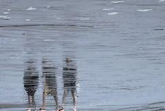 Strandwanderer; St. Peter-Ording, Eiderstedt (2) (Chironius) Tags: schleswigholstein deutschland germany allemagne alemania germania германия niemcy nordsee merdunord mardelnorte northsea spiegelung refleksion reflection réflexion riflessione отражение reflexión yansıma peterording stpeterording see meer nordfriesland eiderstedt