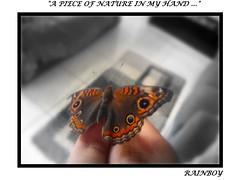 A surprise visit ... (Guilherme Alex) Tags: nature butterfly brightness natural world life hand piece living digitalcamera dv100 art amateur